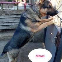 Продам щенков ВЕО, в г.Тирасполь