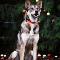 Пёс-антидепрессант, в Санкт-Петербурге