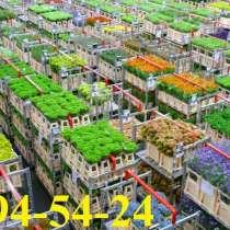 Оптовая продажа цветов, в Красноярске