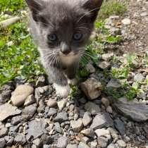 Котята, в г.Хуст