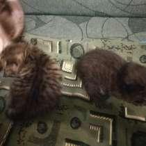 Отдам в хорошие руки двух котиков, в Суворове