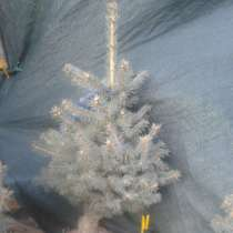 Подарок к празднику, в Таганроге