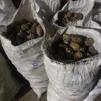 Куплю кедровый орех, кедровую шишку, в Улан-Удэ