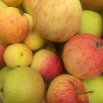 Продам яблоки, в Вологде