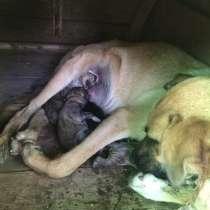 Сегодня на свет появились! 6 щенят хотят найти свой дом, в Кинели
