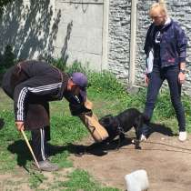 Дрессировка собак, в г.Новомосковск