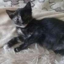 Милая и забавная котенок Фаня в добрые руки, в Москве