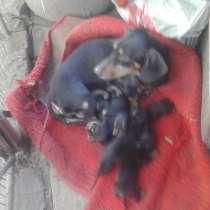 Продажа щенков, в г.Мариуполь