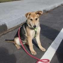 Умный и ласковый щенок, 5 месяцев, в Санкт-Петербурге