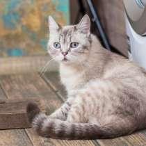 Замечательная кошечка Сэмми ищет дом и любящих родителей, в Москве