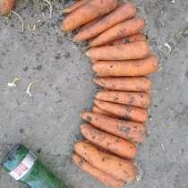 Продам буряк свеклу морковь, в г.Харьков