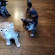 Котятки, в Томске