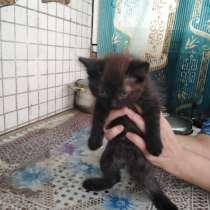 Дарю котят, в г.Витебск