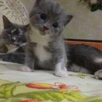 Котик от американки и као мани, в г.Мариуполь