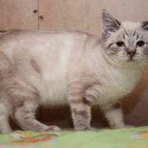 Очаровательные котята (6 мес.) ищут дом, в Москве
