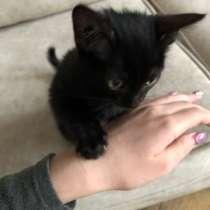 Отдаём чёрного среднешерстного котёнка в хорошие руки!, в Тюмени
