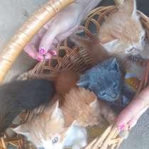 Котята в добрые руки, в г.Шостка