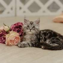 Шикарные котята из питомника, в Екатеринбурге