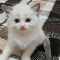 Продам котёнка, в г.Минск