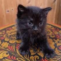 Прелестные котята ищут новый дом, в Воскресенске