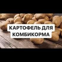 Картофель для комбикорма, в Иркутске