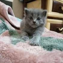 Отдам котят в хорошие руки1.5 месяца, в Краснодаре