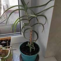 Продам комнатные растения, в Энгельсе