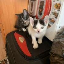 Котятки!!!, в Черногорске