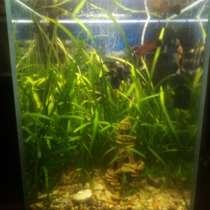Водоросли аквариумные, в Курске