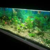 Продам аквариум, в г.Бендеры