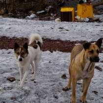 Собачки из приюта ищут дом, в Воркуте