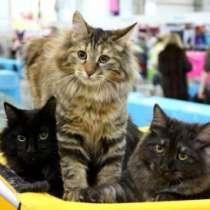 Международная выставка кошек всех пород, в Хабаровске
