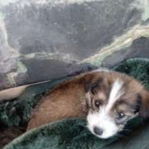 Отдам щенка в хорошие руки, в Славянске-на-Кубани