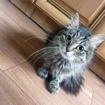 Кошечка ищет надёжного друга, в Великом Новгороде