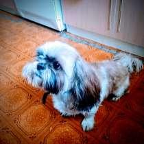 Пропала собака, в Саратове