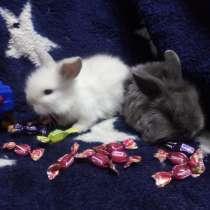 Мини крольчата, в г.Минск