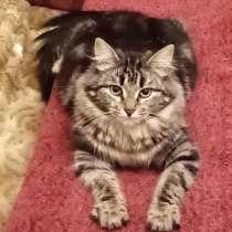 Котенок-подросток в добрые руки. Пушистая Рыся, в Москве
