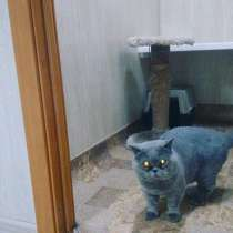Гостиница для животных, в Красноярске
