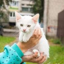 Белый котенок в хорошие руки, в г.Брест