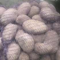 Картофель Ред Скарлет продовольственный от КФХ в МО оптом, в Москве