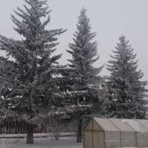 Елки, в Омске