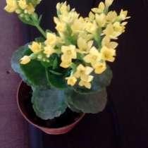 Комнатные цветы. Цена договорная, в Первоуральске