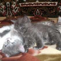 Котята, в г.Вознесенск