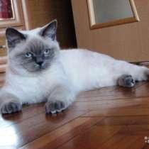 Очень красивый котик британец, в Краснодаре
