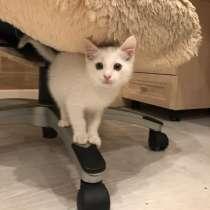 Котёнок, в Хабаровске