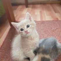 Котята даром, в Улан-Удэ