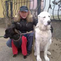 Индивидуальная дрессировка собак, в Феодосии
