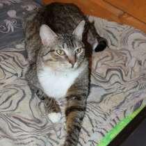 Самый добрый, самый мудрый кот Цезарь. В самые хорошие руки, в Калуге