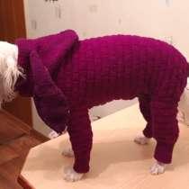 Одежда для собак и кошек, в Москве