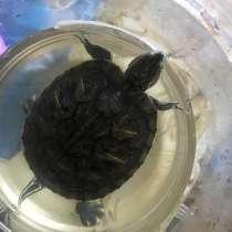 Отдам в хорошие руки красноухою черепаху, но всем вопросам, в Лобне